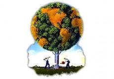Radical ecological democracy