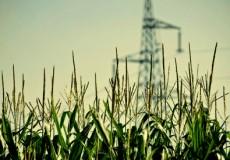 Economía Verde: La nueva cara del Capitalismo